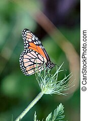 Color Wings - This photo was taken near a small creek in Elk...