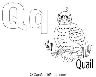coloração, alfabeto, q, crianças