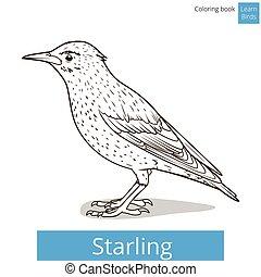 coloração, pássaros, vetorial, starling, aprender, livro