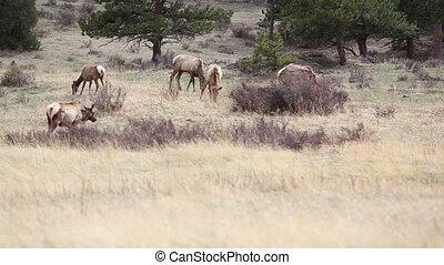 Colorado animals nature wildlife shot one deer