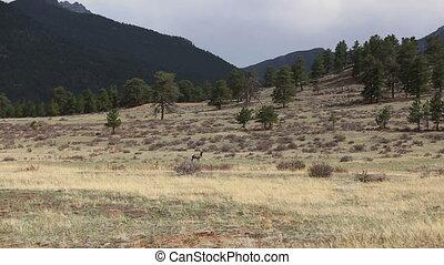 Colorado animals nature wildlife shot two deer
