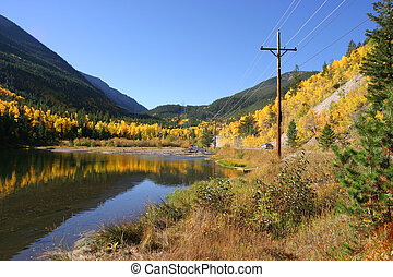 Colorado Aspen leaves in the fall.