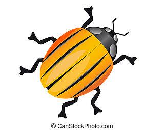 colorado beetle isolated on white background  illustration