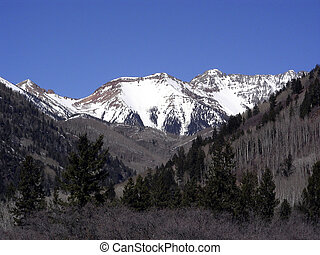 Mountain peak, canyon and pine tree in Colorado Rockies