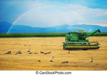 Colorado Harvesting. Modern Harvester and the Rainbow. ...