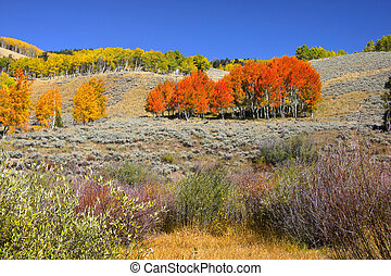 Colorado landscape - Colorful trees on the hill in autumn...