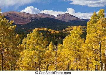 colorado, montanhas rochosas, e, dourado, álamos tremedores, em, outono