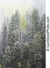 colorado, monte, pinho, gama, floresta, sneffels, snowstorm