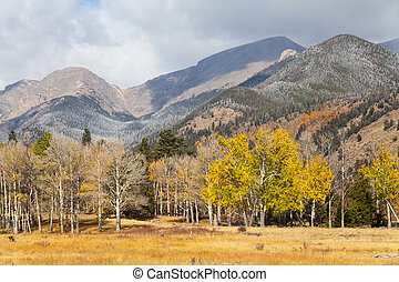 Colorado Mountain Landscape in Fall