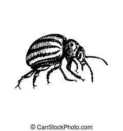 Colorado potato beetle Icon - Colorado beetle icon black...