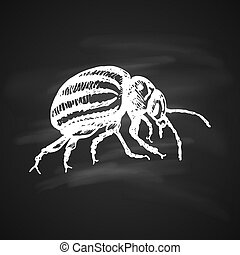 Colorado potato beetle Icon - Colorado beetle icon white...
