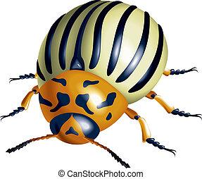 Colorado potato beetle. illustration on white background