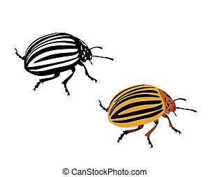 colorado potato beetle - vector