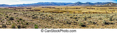 colorado rocky mountains foothills