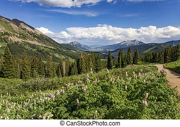 colorado, saison, flanc montagne, wildflower, petite montagne atteinte sommet, long