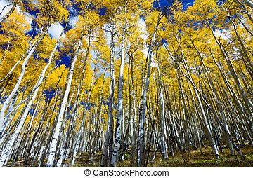 colorado timoroso, giallo, albero, alto, foresta
