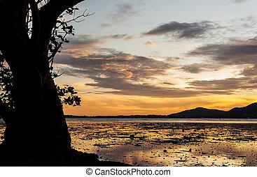 colorare, albero, silhouette, tramonto, grande