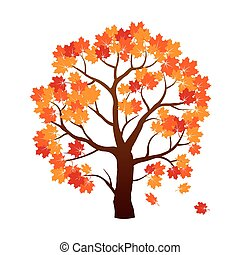 colorare, autunno, albero., acero