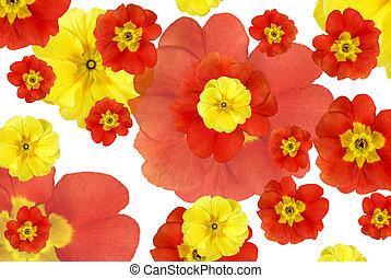 colorare, fiori, fondo