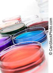 colorare, liquido, in, vecchio, plastica, petri scodella