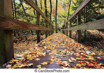 colorare, ponte, immagine, foresta, autunno