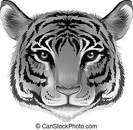 colorare, testa tigre, grigio