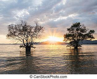 colorare, tramonto, gemello, albero, mare