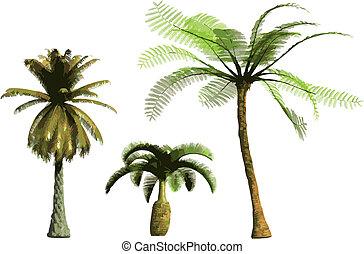 colorare, vettore, -, palme