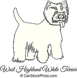 coloration, ouest, chien, blanc, région montagneuse, terrier