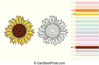 coloration, tournesol, livre, crayons