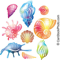 colorato, seashell