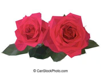 colore rosa scuro, due, rose