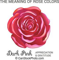 colore rosa scuro, rosa