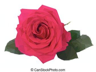 colore rosa scuro, uno, rose