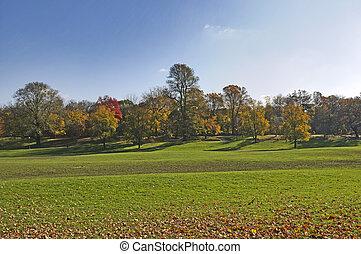 coloreado, árboles del oro, otoño, park., línea roja, camino