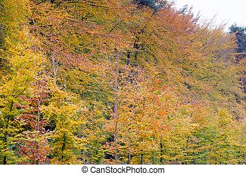 coloreado, hojas, en, otoño, park.