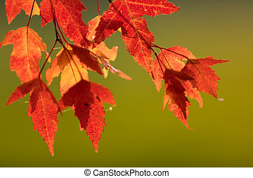 Colored autumn background with maple leaves