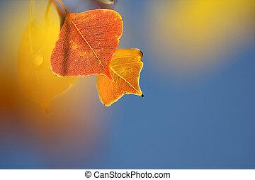 colored autumn foliage