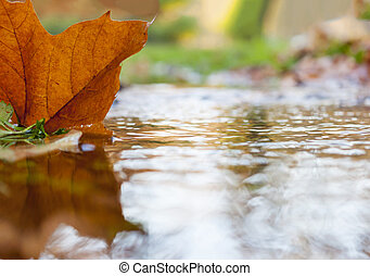 Colored autumn leaf in the water
