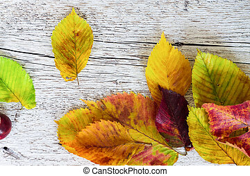 colored autumn leaves close-up on a white wooden background