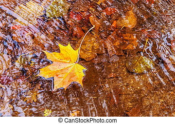 colored autumn leaves in water