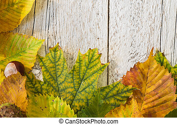 autumn leaves on a white wooden background