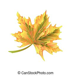 Colored autumnal leaf Maple vector.eps - Colored autumnal...
