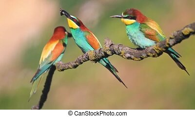 colored birds catch bumblebee, sit on a branch and fly away...