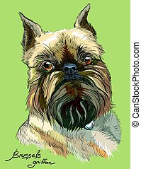 Colored brussels griffon dog vector portrait
