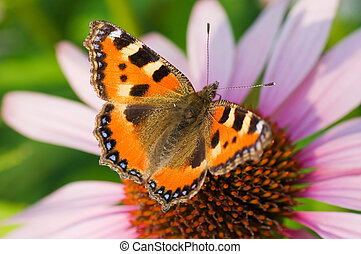 Colored butterfly on flower