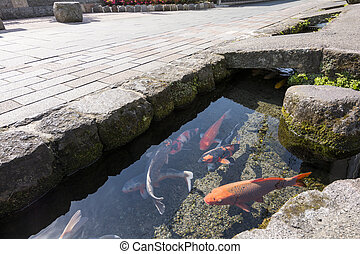 Colored carp swim a water passage of roadside in Shimabara,...