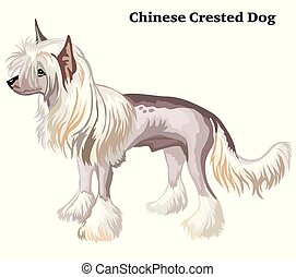 Colored decorative standing portrait of Chinese Crested Dog...