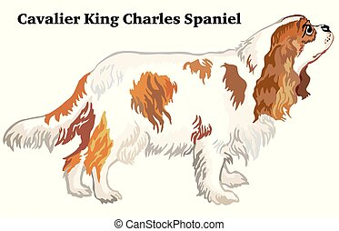 Colored decorative standing portrait of dog Cavalier King...