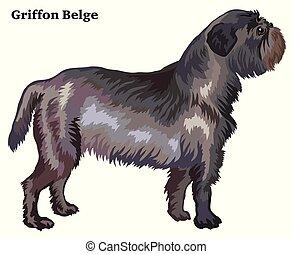 Colored decorative standing portrait of dog Griffon Belge vector illustration